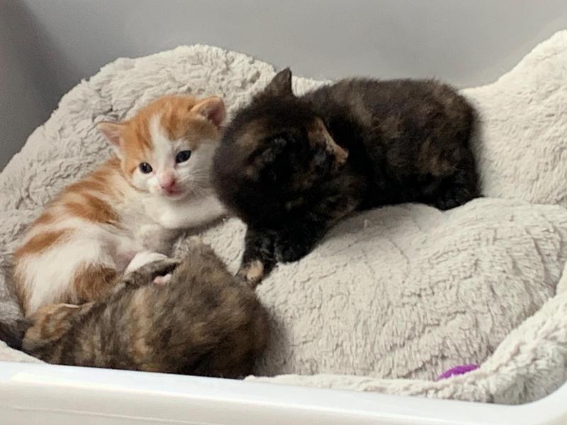 3 pisicute
